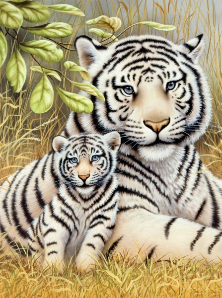 PJS White Tiger Pair